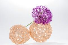 Allium Giganteum del fiore dell'allium con la decorazione Immagini Stock