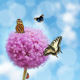 Allium with insects. Allium flower with butterfly and ladybug Royalty Free Stock Images