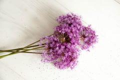 Allium porpora Immagine Stock Libera da Diritti