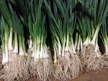 Allium porrum Fotografia Stock