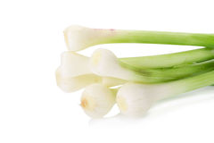 Allium porrum su fondo bianco Fotografia Stock Libera da Diritti