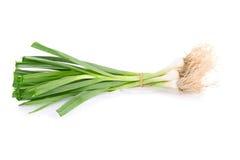 Allium porrum on white background Royalty Free Stock Photo