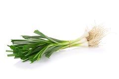 Allium porrum on white background Royalty Free Stock Image