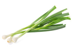 Allium porrum on white background Stock Photo