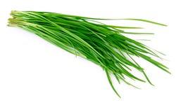 allium ramosum Στοκ εικόνα με δικαίωμα ελεύθερης χρήσης