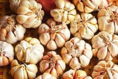 Allium sativum Fotografie Stock