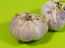 Allium sativum commonly known as garlic Stock Photography