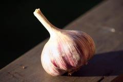 Allium sativum, conosciuto comunemente come aglio Immagine Stock Libera da Diritti