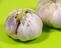 Allium sativum conosciuto comunemente come aglio Fotografia Stock Libera da Diritti