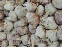Allium sativum dell'aglio Immagini Stock Libere da Diritti