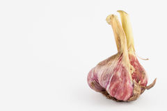 Allium sativum dell'aglio Fotografia Stock