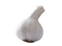 Allium sativum garlic isolated on white background Royalty Free Stock Photo