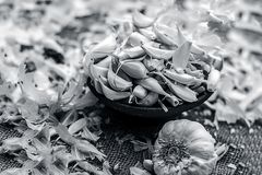 Allium sativum, Raw Garlic in a clay bowl on a gunny background. Stock Images