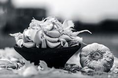 Allium sativum, Raw Garlic in a clay bowl on a gunny background. Allium sativum,  Raw Garlic in a clay bowl on a  gunny background Royalty Free Stock Images