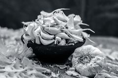 Allium sativum, Raw Garlic in a clay bowl on a gunny background. Royalty Free Stock Images