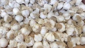 Allium SP Stock Fotografie