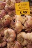 Allium SP Stock Foto