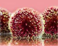 Allium su vetro Fotografie Stock Libere da Diritti
