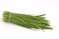 Allium tuberosum Rottl Ex Spreng Immagini Stock
