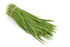 Allium tuberosum Rottl Ex Spreng Immagine Stock Libera da Diritti