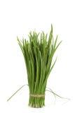 Allium tuberosum Rottl Ex Spreng Fotografia Stock Libera da Diritti