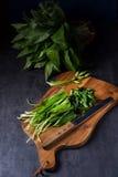 Allium ursinum. A fresh and tasty Allium ursinum royalty free stock photography
