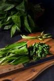 Allium ursinum. A fresh and tasty Allium ursinum stock image