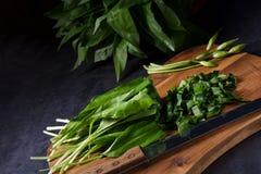 Allium ursinum. A fresh and tasty Allium ursinum stock photos