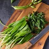 Allium ursinum. A fresh and tasty Allium ursinum stock photo