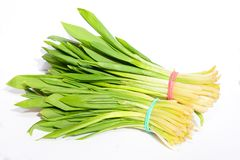 Allium ursinum – known as ramsons, buckrams, wild garlic, broad-leaved garlic, wood garlic, bear leek, or bear`s garlic isolate. D on white stock images