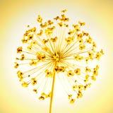 Alliumkärna ur-huvud Arkivfoto