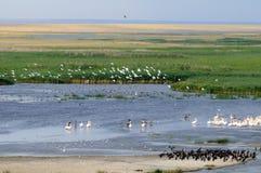 Allmän flyg- sikt av Manych sjön med massor av fåglar Arkivbild