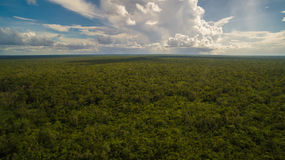 Allmän sikt av djungeln Arkivfoton