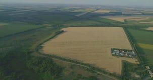 Allmän sikt av fälten med vete, nödgräs, majs, korn, havre som är rhy stock video