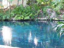 Allmän sikt av klar cenote för blått vatten nära Chichen Itza, Mexico royaltyfri foto