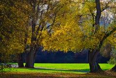 Allmänhet parkerar med träd på en solig höstdag arkivbild