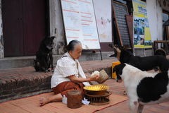 Allmosa som ger ceremoni i Luang Prabang, Laos Arkivbilder