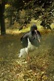 Allo zoo Immagine della cicogna graziosa che sta su una gamba Fotografie Stock