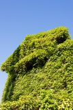 Alloggi che ha aggrovigliato con l'edera Fotografia Stock