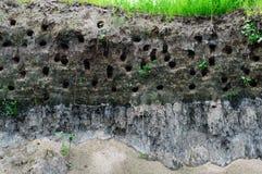 Alloggi gli uccelli della steppa - fori nella banca ripida del fiume Immagine Stock
