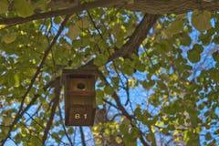 Alloggi gli uccelli in un albero in pieno delle foglie Immagini Stock Libere da Diritti