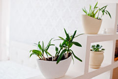 Alloggi i fiori nella forma della navetta dei vasi alla parete decorativa su luce r Immagine Stock