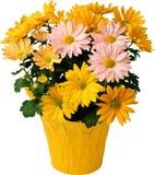Alloggi i fiori in un vaso su un fondo bianco Immagini Stock