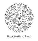 Alloggi il concetto delle piante per il negozio del Garden Center, del fiore & di fiorista V Fotografia Stock