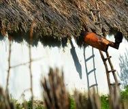 Alloggi il dettaglio con il tetto a lamella tradizionale nel delta del Danubio Fotografia Stock