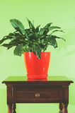 Alloggi il fiore in vaso da fiori rosso sul vecchio cassettone contro la parete verde molle Fotografia Stock