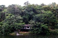 Alloggi il fiume di amazon della foresta pluviale Fotografie Stock