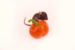 Alloggi il ratto ed i peperoni Fotografia Stock Libera da Diritti