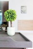 Alloggi il vaso bianco dei dettagli della decorazione con il piccolo albero Immagini Stock Libere da Diritti