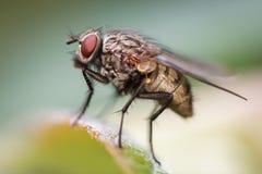 Alloggi la mosca Fotografia Stock Libera da Diritti